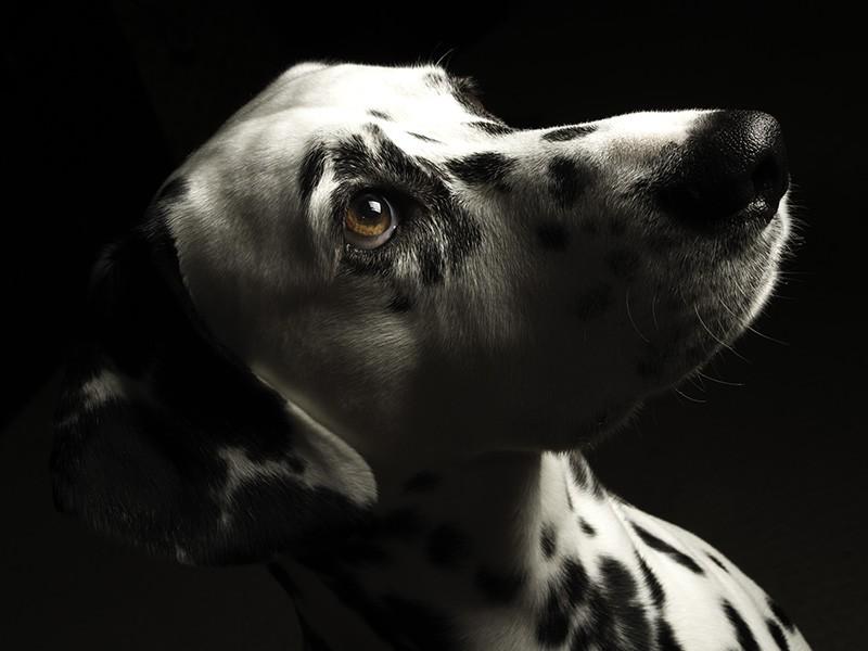 Low Key Pet Portrait Photography